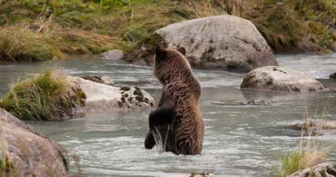 Chilkoot Canoe Wildlife Safari with Skagway Shore Tours